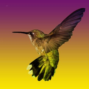 hummingbird_small